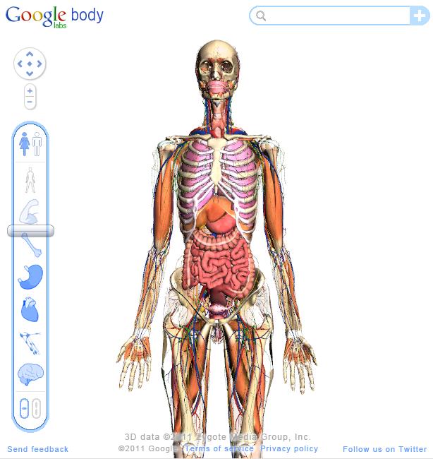 Google Body Browser - der gläserne Mensch in 3D - Jürgen\'s Technik-Welt